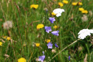 Natürliche Artenvielfalt auf einer Magerwiese in Remscheid
